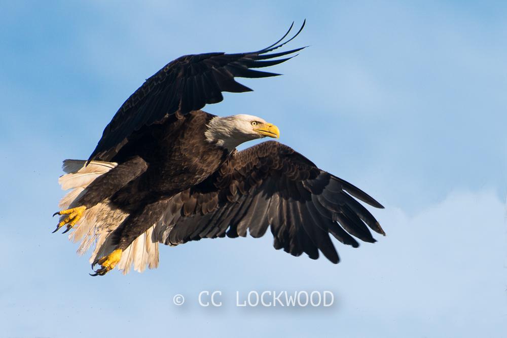 Eagle Expo Photo Workshop