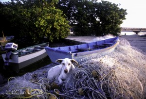 A dog rests in his master's fishing nets